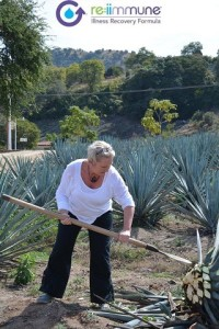 Agave, Agave inulin, re:iimmune all natural ingredient